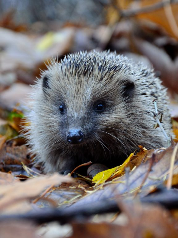 What Hedgehogs Teach us about Business Success